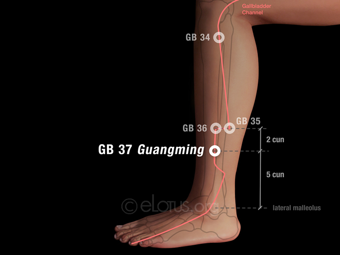 Guangming (GB 37)   Master Tung's Acupuncture   eLotus CORE