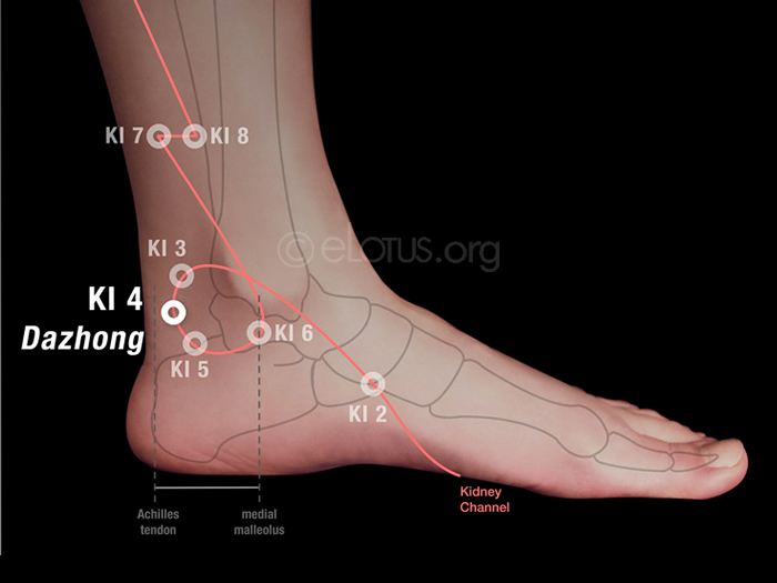Dazhong (KI 4)   Master Tung's Acupuncture   eLotus CORE